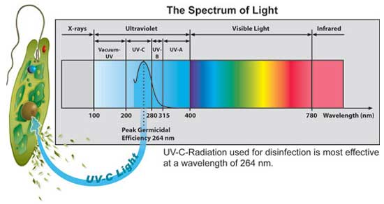 scienceUV-Cspectrum.jpg